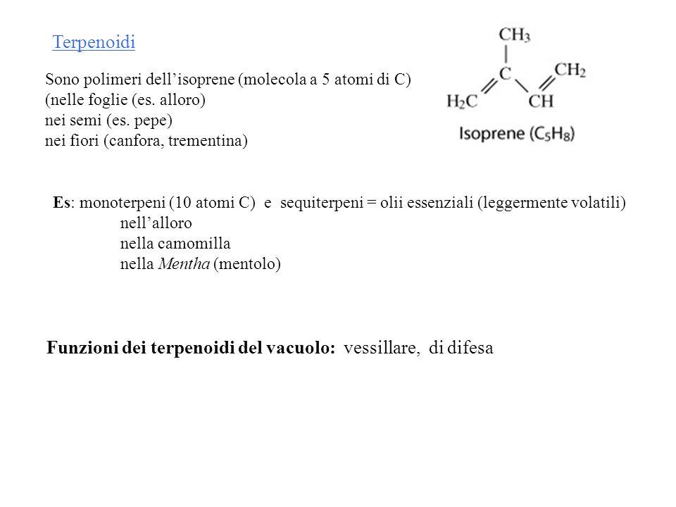 Terpenoidi Sono polimeri dellisoprene (molecola a 5 atomi di C) (nelle foglie (es. alloro) nei semi (es. pepe) nei fiori (canfora, trementina) Es: mon