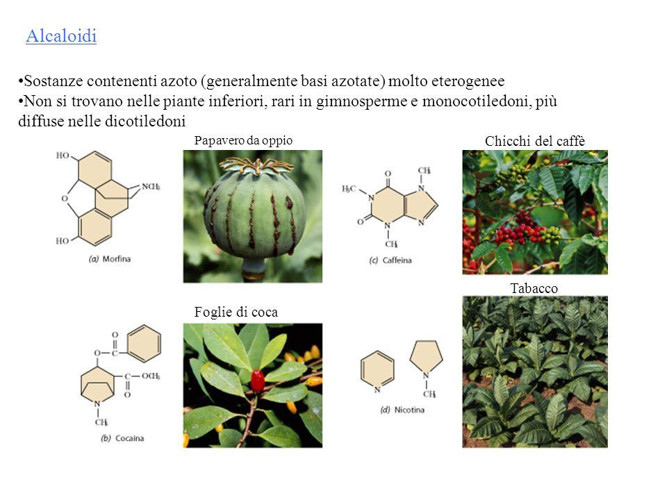 Alcaloidi Sostanze contenenti azoto (generalmente basi azotate) molto eterogenee Non si trovano nelle piante inferiori, rari in gimnosperme e monocoti