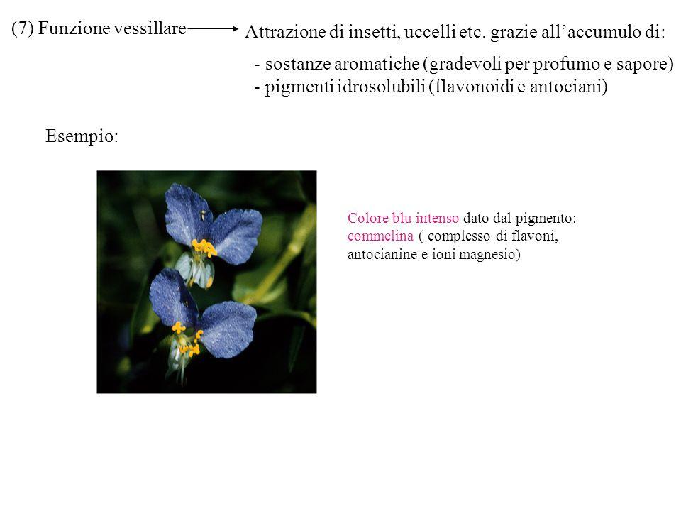 (7) Funzione vessillare Attrazione di insetti, uccelli etc. grazie allaccumulo di: - sostanze aromatiche (gradevoli per profumo e sapore) - pigmenti i