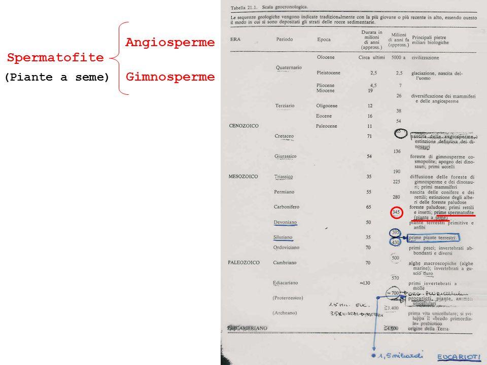 Gimnosperme Angiosperme (Piante a seme)