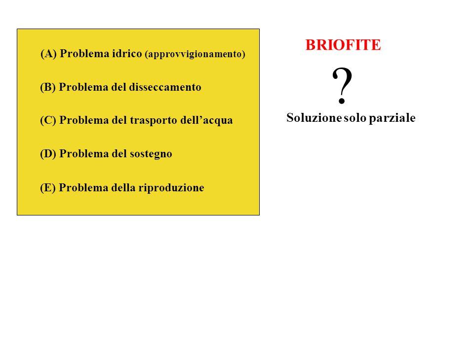 (A) Problema idrico (approvvigionamento) (B) Problema del disseccamento (C) Problema del trasporto dellacqua (D) Problema del sostegno (E) Problema de