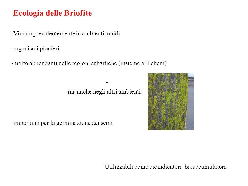 Ecologia delle Briofite -Vivono prevalentemente in ambienti umidi -organismi pionieri -molto abbondanti nelle regioni subartiche (insieme ai licheni)