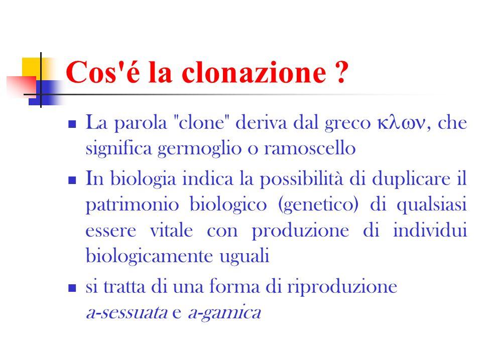 Le tappe della clonazione 1951: prima clonazione di animali (rane) ottenuta con successo 1972: clonazione di un frammento di DNA (molto importante per il proseguimento della ricerca) 1979: clonazione di mammiferi: si è trattato della formazione multipla di embrioni da uno solo (separazione dei blastomeri di un embrione).
