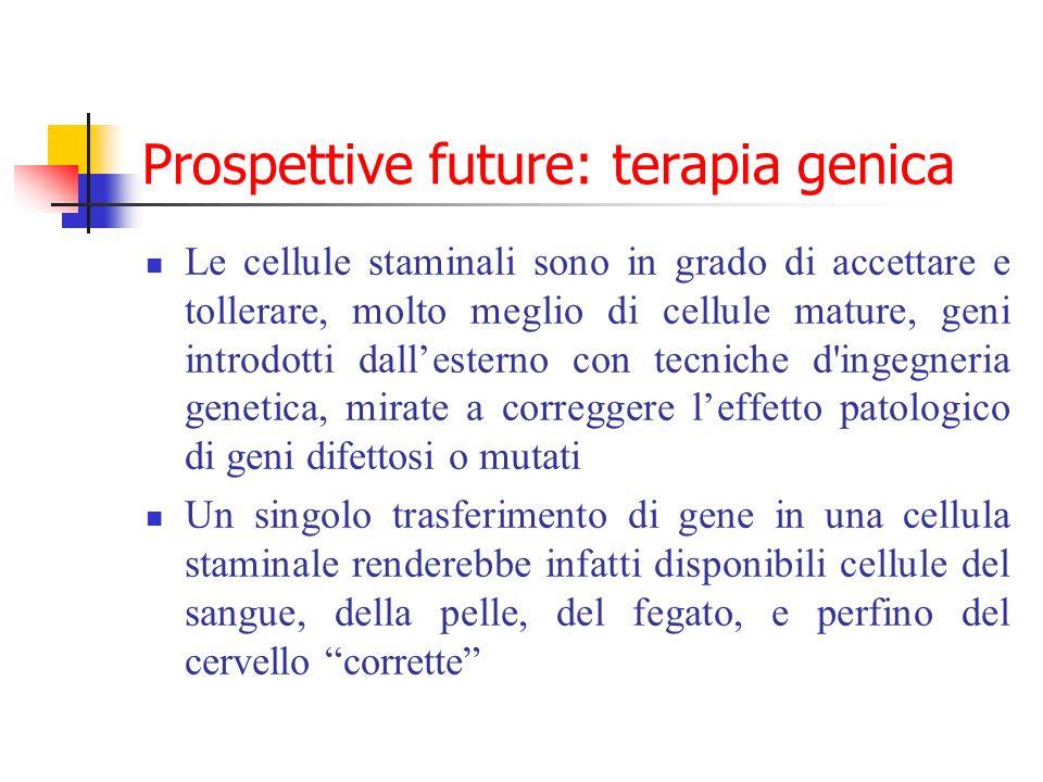 Prospettive future: terapia genica Le cellule staminali sono in grado di accettare e tollerare, molto meglio di cellule mature, geni introdotti dalles
