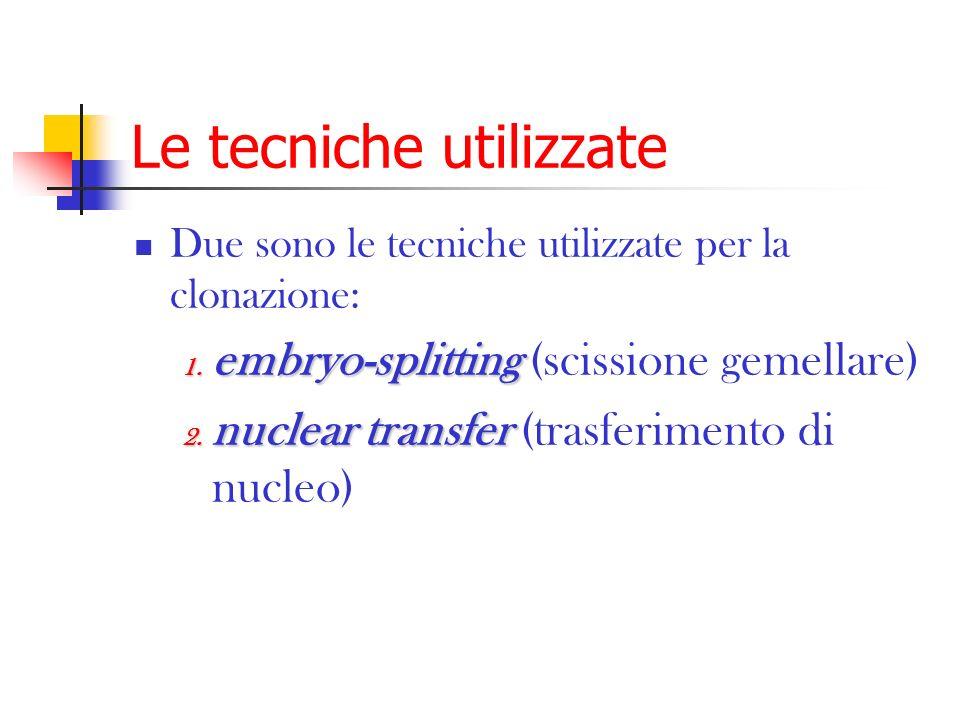 Le tecniche utilizzate Due sono le tecniche utilizzate per la clonazione: 1. embryo-splitting 1. embryo-splitting (scissione gemellare) 2. nuclear tra