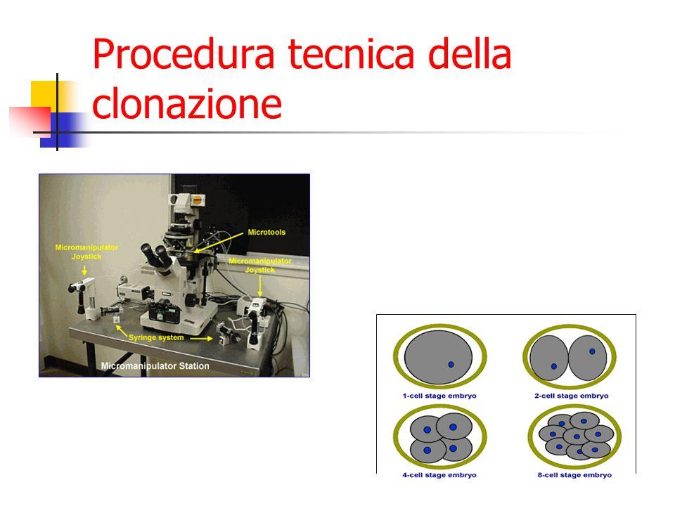 Finalità della clonazione Riproduttiva: cioè volta a duplicare su richiesta o necessità un individuo Terapeutica: volta a duplicare un organismo dal quale ricavare cellule, tessuti ed organi per scopi clinici