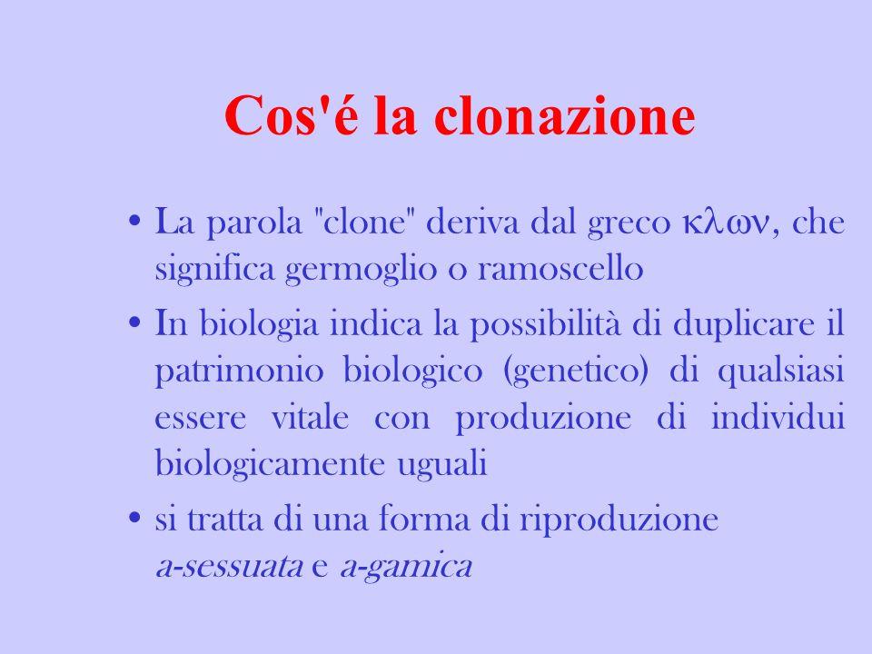 Cos'é la clonazione ? La parola