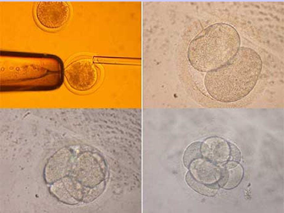 Finalità della clonazione Terapeutica: volta a duplicare un organismo dal quale ricavare cellule, tessuti ed organi per scopi clinici Riproduttiva: cioè volta a duplicare su richiesta o necessità un individuo