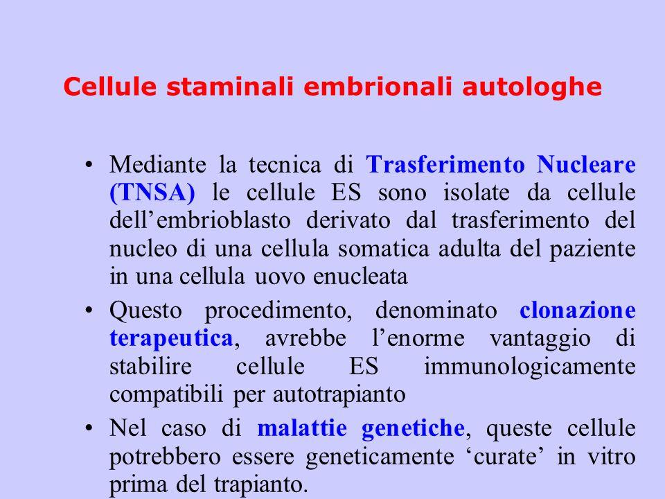 Cellule staminali embrionali autologhe Mediante la tecnica di Trasferimento Nucleare (TNSA) le cellule ES sono isolate da cellule dellembrioblasto der