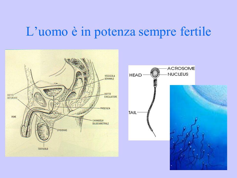 La donna è fertile in rapporto al ciclo ovarico