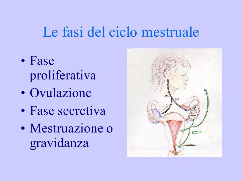 Le fasi del ciclo mestruale Fase proliferativa Ovulazione Fase secretiva Mestruazione o gravidanza