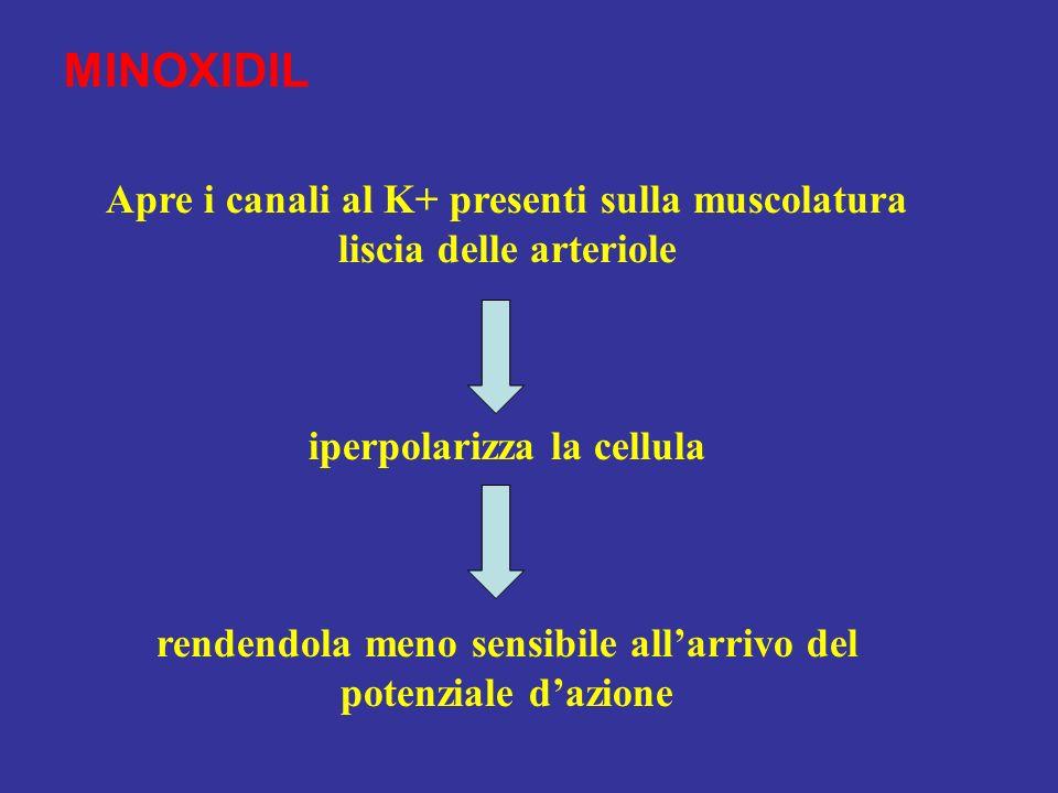 MINOXIDIL Apre i canali al K+ presenti sulla muscolatura liscia delle arteriole iperpolarizza la cellula rendendola meno sensibile allarrivo del poten