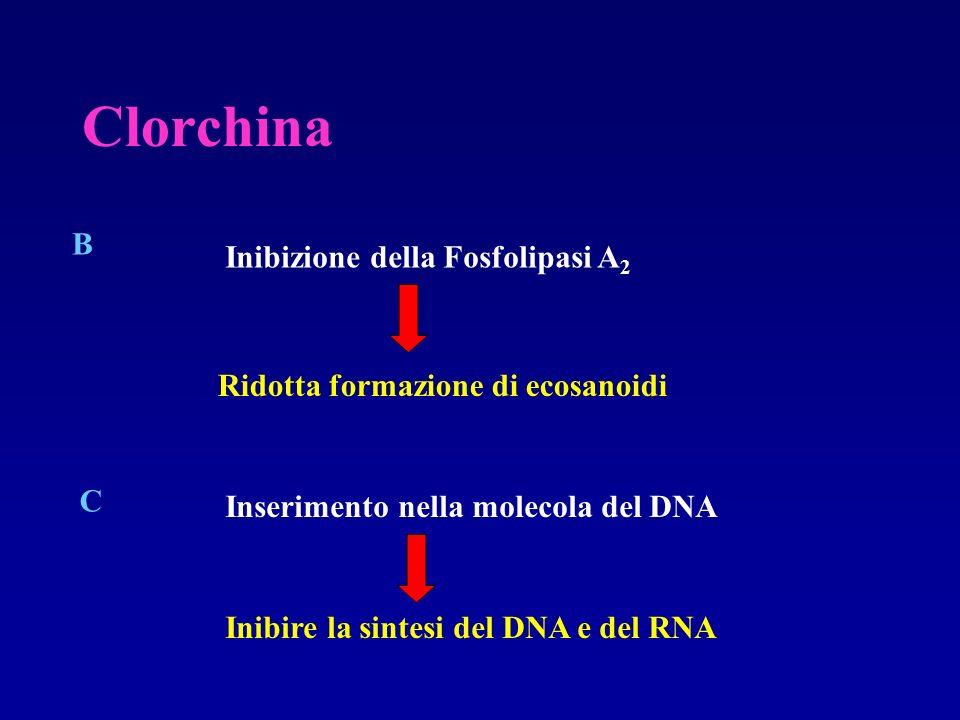 Clorchina B Inibizione della Fosfolipasi A 2 Ridotta formazione di ecosanoidi C Inserimento nella molecola del DNA Inibire la sintesi del DNA e del RN