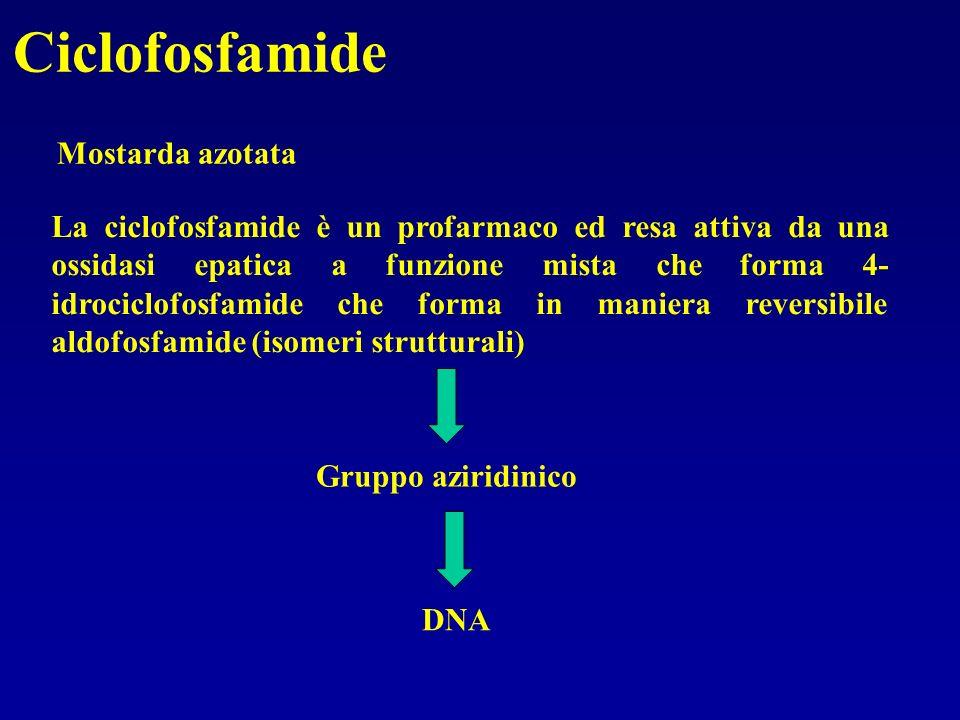 Ciclofosfamide Mostarda azotata La ciclofosfamide è un profarmaco ed resa attiva da una ossidasi epatica a funzione mista che forma 4- idrociclofosfam