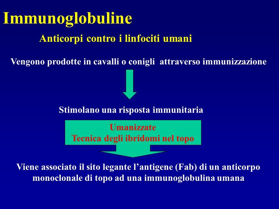 Immunoglobuline Anticorpi contro i linfociti umani Vengono prodotte in cavalli o conigli attraverso immunizzazione Stimolano una risposta immunitaria