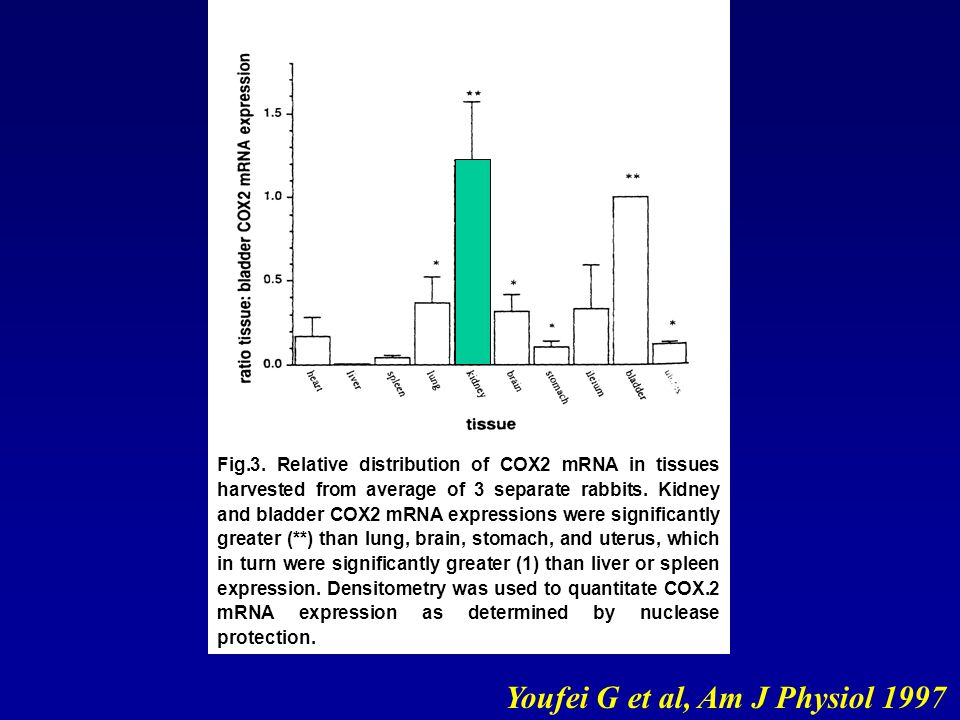 Youfei G et al, Am J Physiol 1997 Fig.3. Relative distribution of COX2 mRNA in tissues harvested from average of 3 separate rabbits. Kidney and bladde