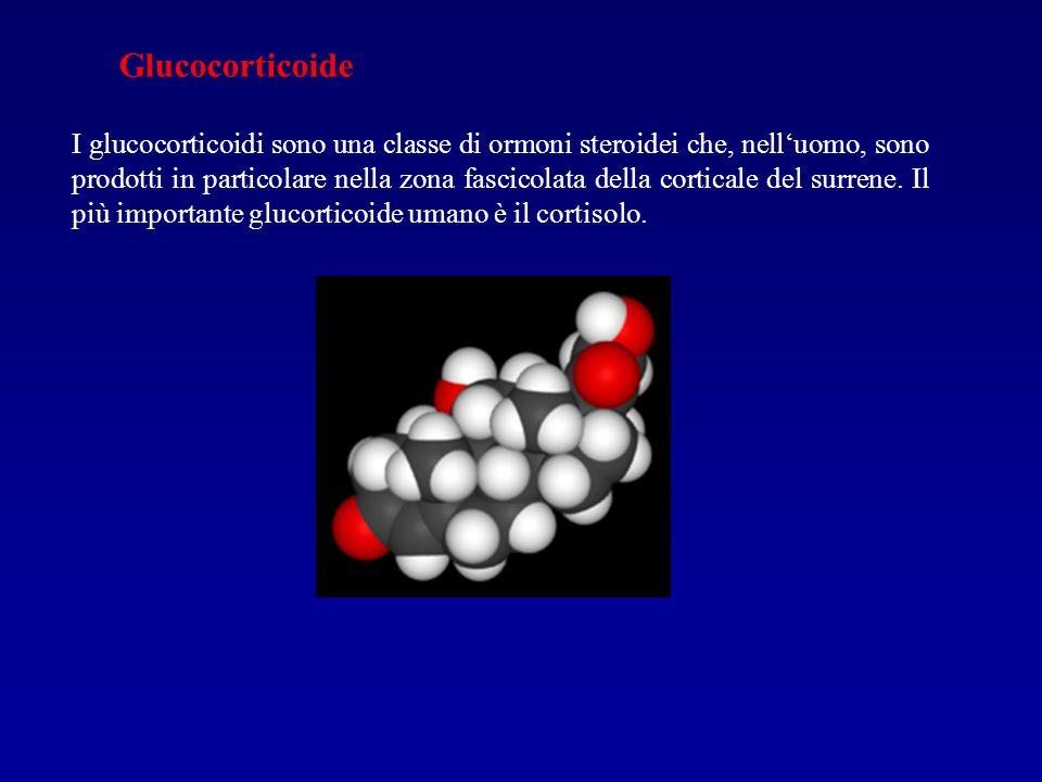 Glucocorticoide I glucocorticoidi sono una classe di ormoni steroidei che, nelluomo, sono prodotti in particolare nella zona fascicolata della cortica