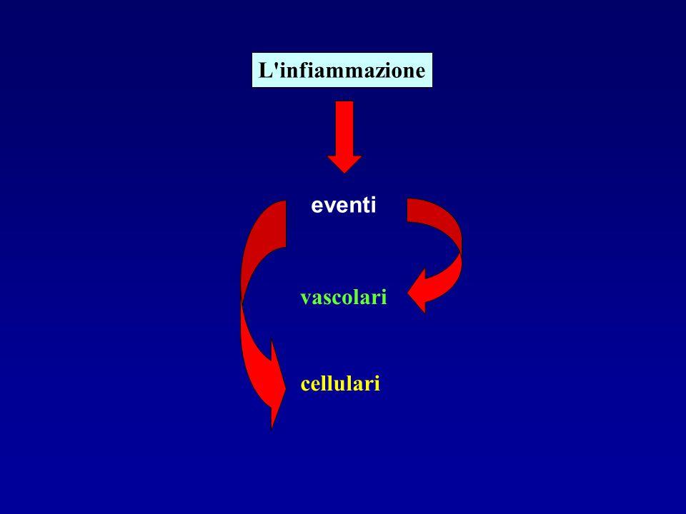 L'infiammazione vascolari cellulari eventi