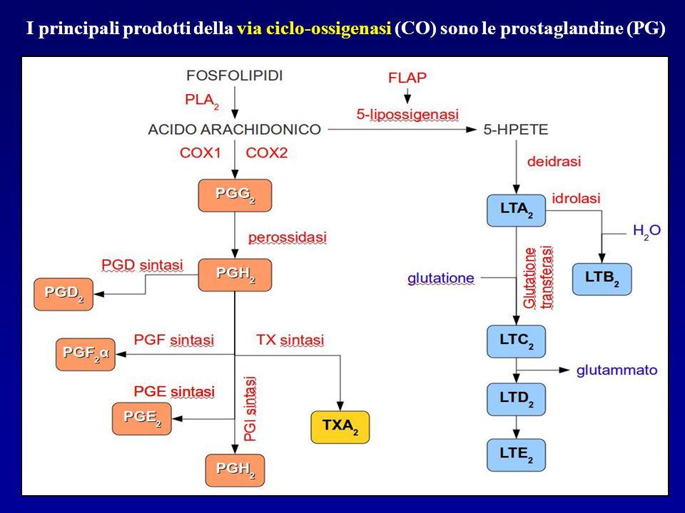 I principali prodotti della via ciclo-ossigenasi (CO) sono le prostaglandine (PG)