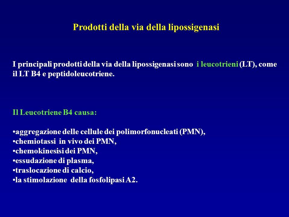 I principali prodotti della via della lipossigenasi sono i leucotrieni (LT), come il LT B4 e peptidoleucotriene. Il Leucotriene B4 causa: aggregazione