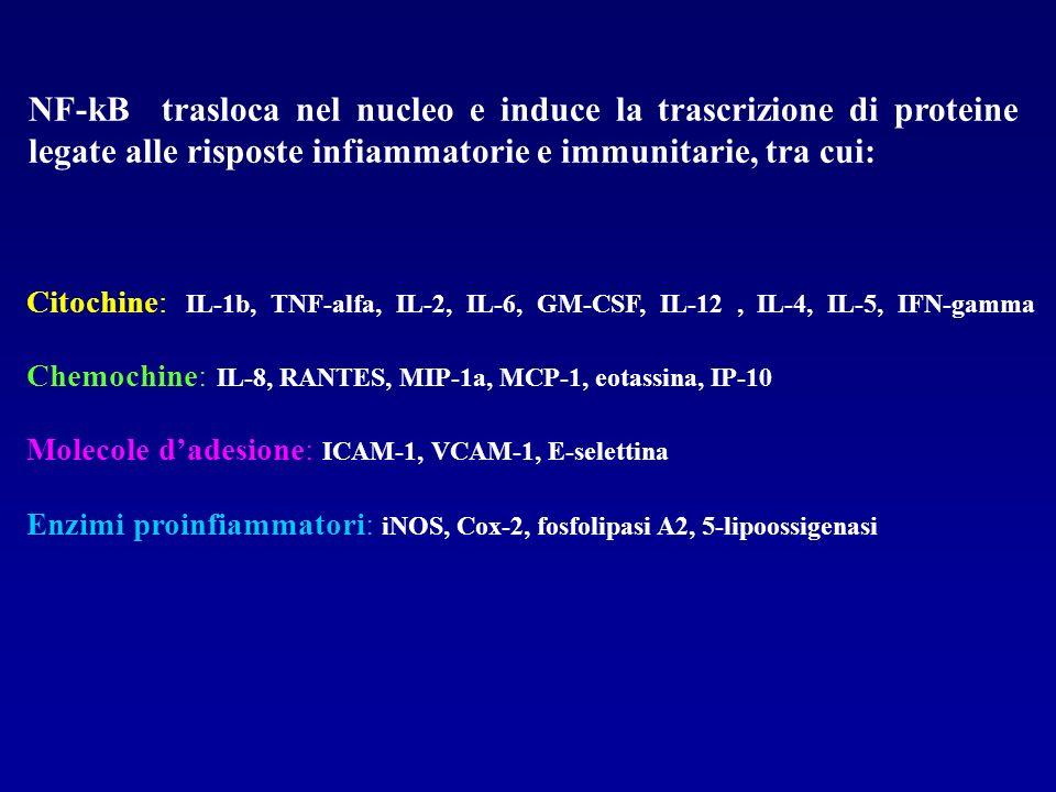 Citochine: IL-1b, TNF-alfa, IL-2, IL-6, GM-CSF, IL-12, IL-4, IL-5, IFN-gamma Chemochine: IL-8, RANTES, MIP-1a, MCP-1, eotassina, IP-10 Molecole dadesi