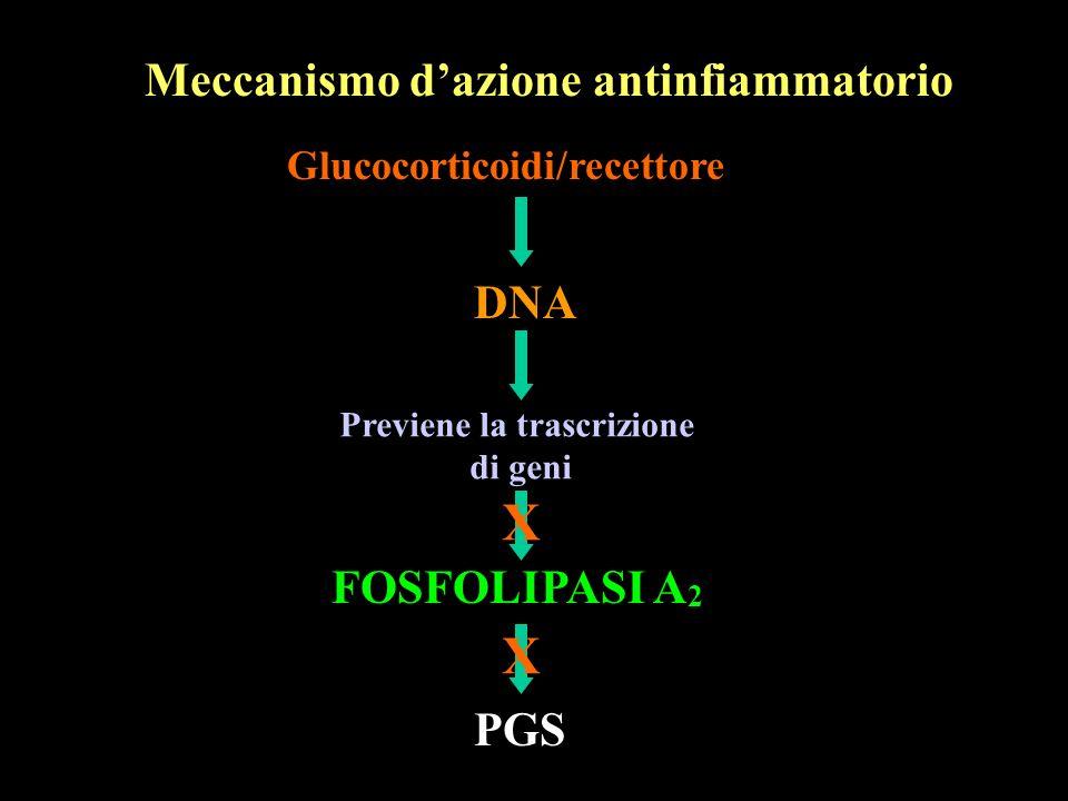 Meccanismo dazione antinfiammatorio Glucocorticoidi/recettore DNA Previene la trascrizione di geni FOSFOLIPASI A 2 PGS X X