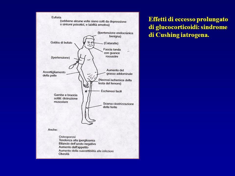 Effetti di eccesso prolungato di glucocorticoidi: sindrome di Cushing iatrogena.