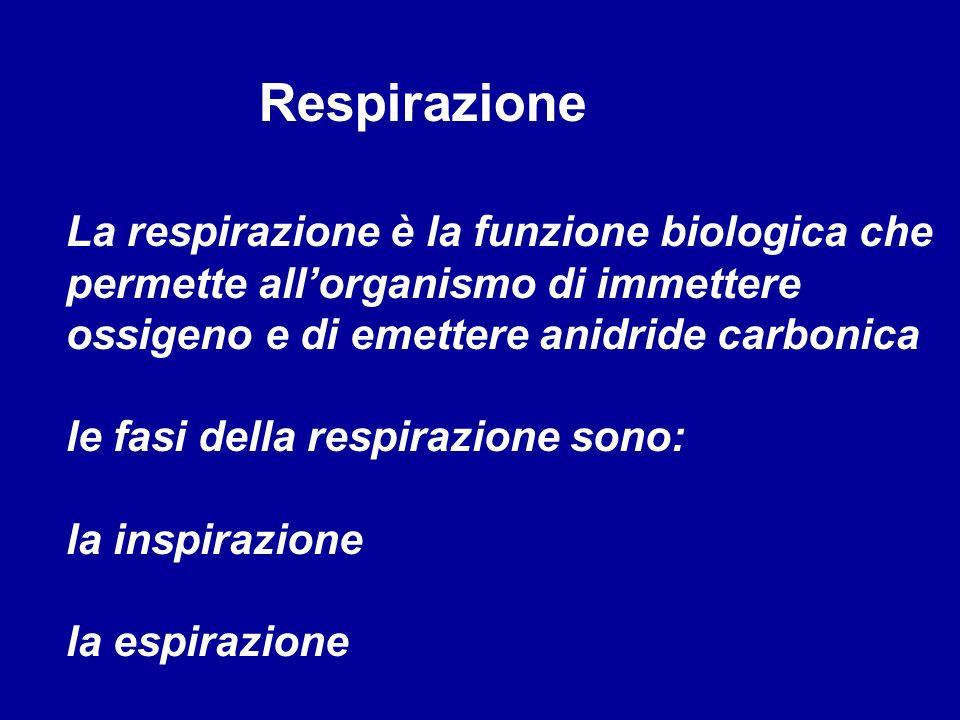 Respirazione La respirazione è la funzione biologica che permette allorganismo di immettere ossigeno e di emettere anidride carbonica le fasi della re