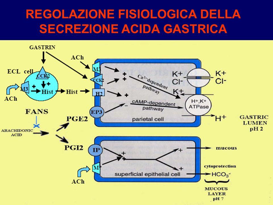 Farmaci per lulcera peptica antiacidi protettori della mucosa gastrica agonisti delle PG antagonisti muscarinici antagonisti dei recettori H2 inibitori della pompa protonica antagonisti dei recettori CCK2 della gastrina antibiotici nel caso di presenza di H.pylori