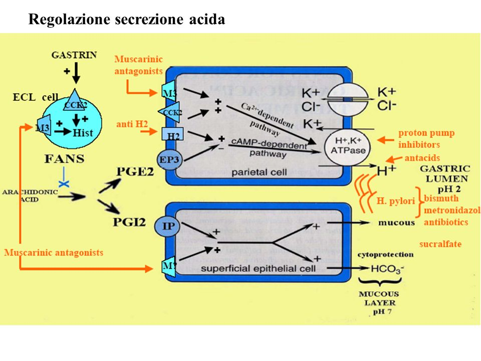 Regolazione secrezione acida