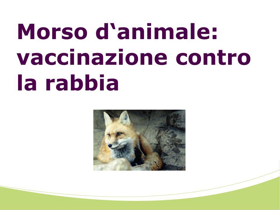 Morso danimale: vaccinazione contro la rabbia