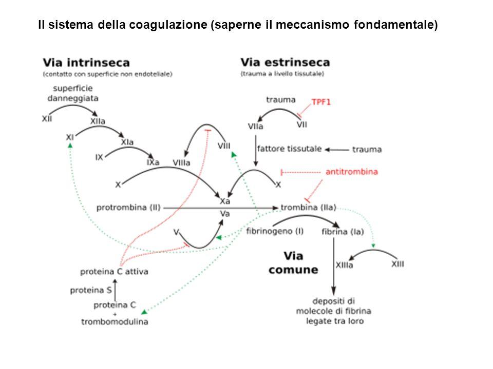 Stati trombofilici acquisiti Gravidanza e puerperio Stati post-operatori Immobilizzazione Traumi Età avanzata Uso di estro-progestinici Stati trombofilici congeniti Carenza antitrombina III Carenza proteina C Carenza proteina S Resistenza alla proteina C attivata (mutazione del gene del fattore V ( di Leiden) Mutazione del gene della protrombina (G20210A) Iperomocisteinemia Malattie associate a trombofilia Tumori e chemioterapia antitumorale Malattie mioloproliferative Scompenso cardiaco Sindrome nefrosica Diabete Iperlipidemia Iperviscosità ematica Porpora trombotica trombocitopenica
