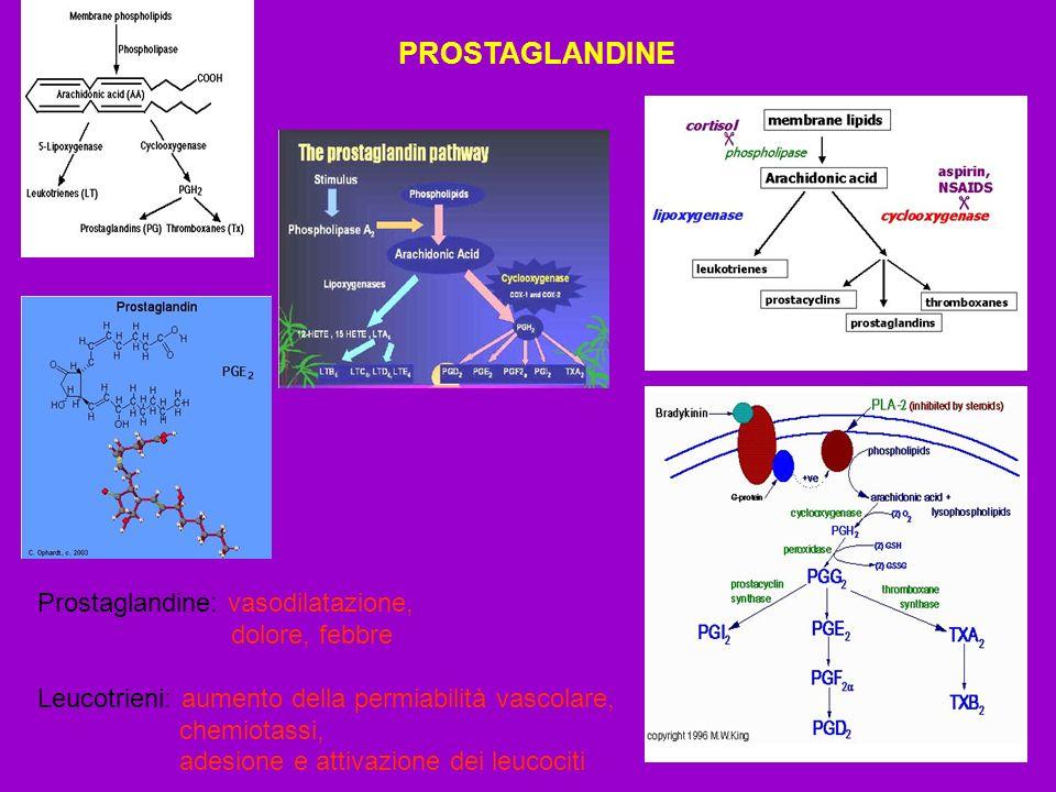 PROSTAGLANDINE Prostaglandine: vasodilatazione, dolore, febbre Leucotrieni: aumento della permiabilità vascolare, chemiotassi, adesione e attivazione
