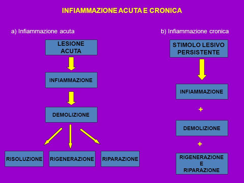 INFIAMMAZIONE ACUTA E CRONICA a) Infiammazione acuta b) Infiammazione cronica LESIONE ACUTA INFIAMMAZIONE DEMOLIZIONE RISOLUZIONERIGENERAZIONERIPARAZI