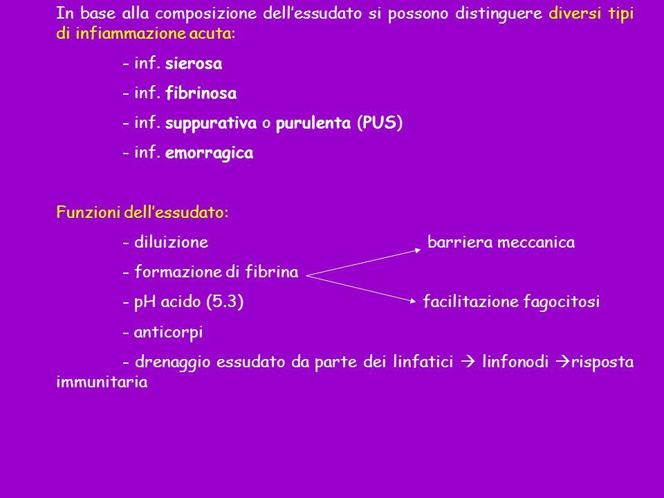 In base alla composizione dellessudato si possono distinguere diversi tipi di infiammazione acuta: - inf. sierosa - inf. fibrinosa - inf. suppurativa