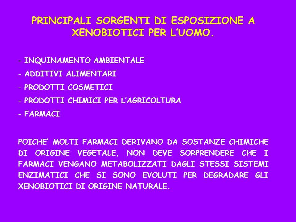 PRINCIPALI SORGENTI DI ESPOSIZIONE A XENOBIOTICI PER LUOMO. - INQUINAMENTO AMBIENTALE - ADDITIVI ALIMENTARI - PRODOTTI COSMETICI - PRODOTTI CHIMICI PE
