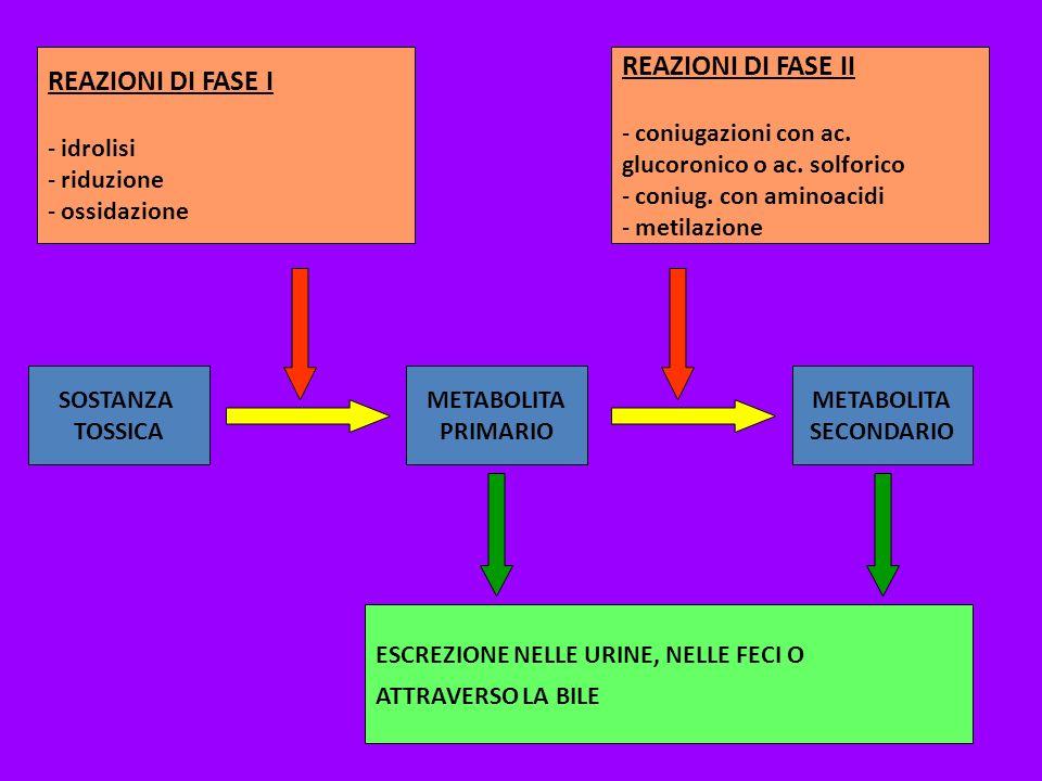 SOSTANZA TOSSICA METABOLITA PRIMARIO METABOLITA SECONDARIO REAZIONI DI FASE I - idrolisi - riduzione - ossidazione REAZIONI DI FASE II - coniugazioni