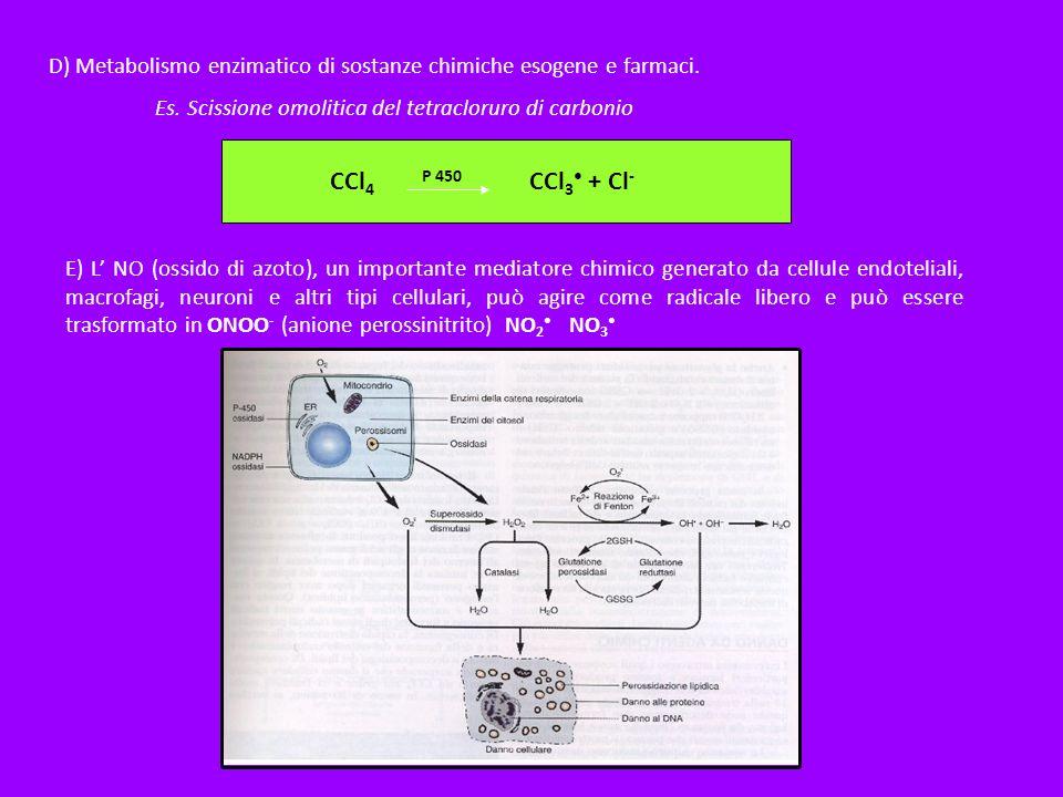 D) Metabolismo enzimatico di sostanze chimiche esogene e farmaci. Es. Scissione omolitica del tetracloruro di carbonio CCl 4 P 450 CCl 3 + Cl - E) L N