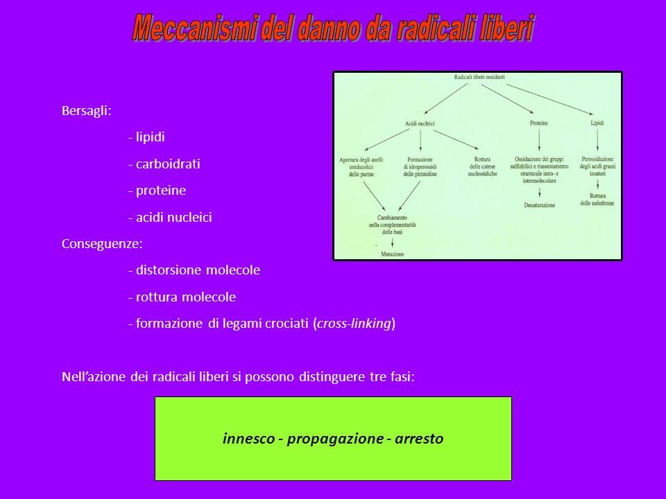 Bersagli: - lipidi - carboidrati - proteine - acidi nucleici Conseguenze: - distorsione molecole - rottura molecole - formazione di legami crociati (c