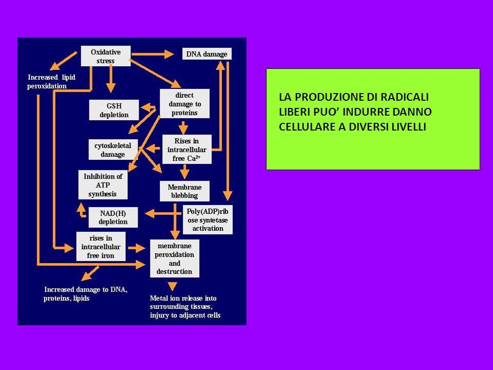 La produzione di radicali liberi può indurre danno cellulare a diversi livelli. LA PRODUZIONE DI RADICALI LIBERI PUO INDURRE DANNO CELLULARE A DIVERSI