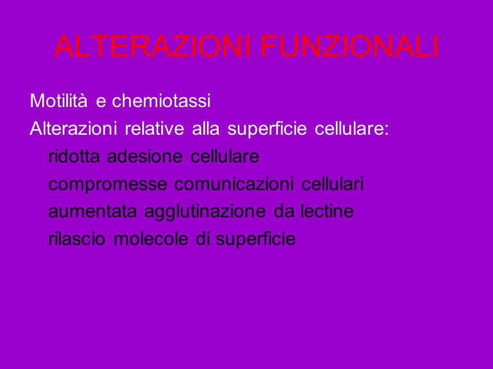 ALTERAZIONI FUNZIONALI Motilità e chemiotassi Alterazioni relative alla superficie cellulare: ridotta adesione cellulare compromesse comunicazioni cellulari aumentata agglutinazione da lectine rilascio molecole di superficie