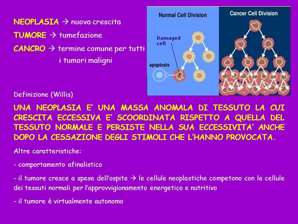 NEOPLASIA nuova crescita TUMORE tumefazione CANCRO termine comune per tutti i tumori maligni Definizione (Willis) UNA NEOPLASIA E UNA MASSA ANOMALA DI TESSUTO LA CUI CRESCITA ECCESSIVA E SCOORDINATA RISPETTO A QUELLA DEL TESSUTO NORMALE E PERSISTE NELLA SUA ECCESSIVITA ANCHE DOPO LA CESSAZIONE DEGLI STIMOLI CHE LHANNO PROVOCATA.