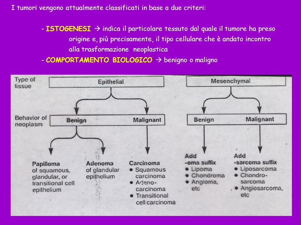Sintesi di proteine fetali e/o embrionali Sintesi di ormoni Sintesi di enzimi