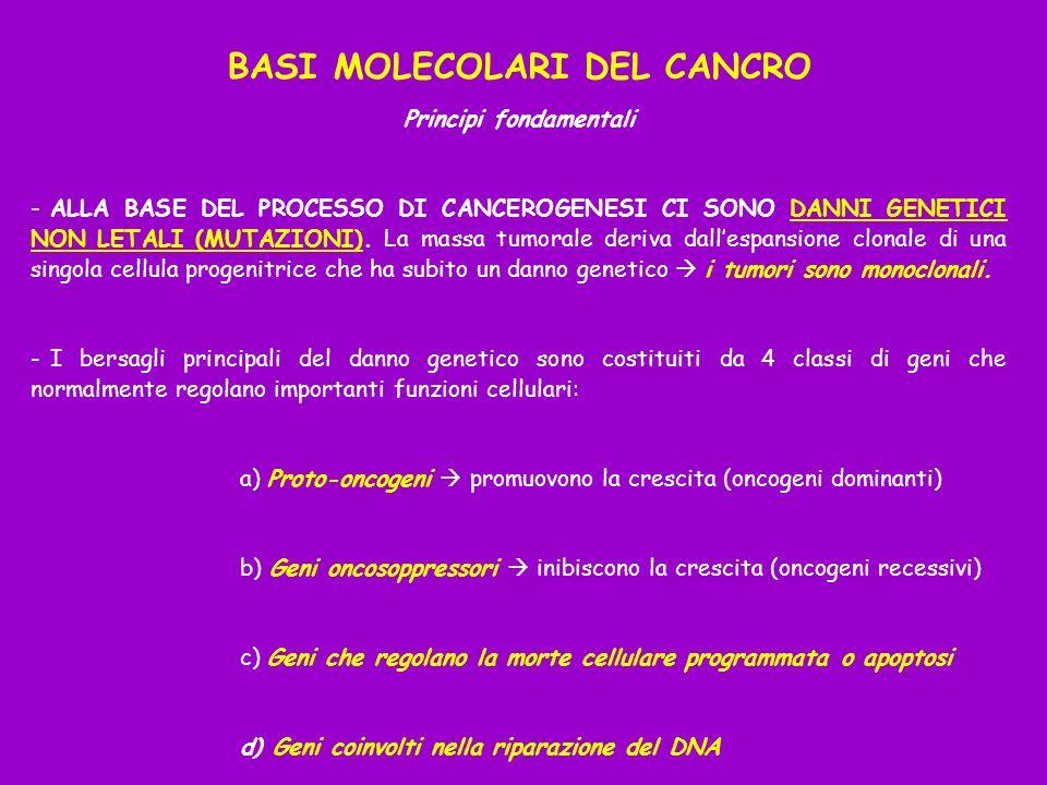 BASI MOLECOLARI DEL CANCRO Principi fondamentali - ALLA BASE DEL PROCESSO DI CANCEROGENESI CI SONO DANNI GENETICI NON LETALI (MUTAZIONI).