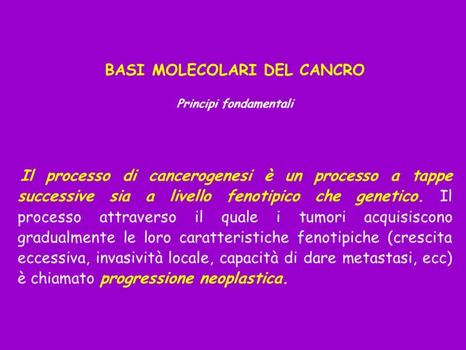BASI MOLECOLARI DEL CANCRO Principi fondamentali Il processo di cancerogenesi è un processo a tappe successive sia a livello fenotipico che genetico.