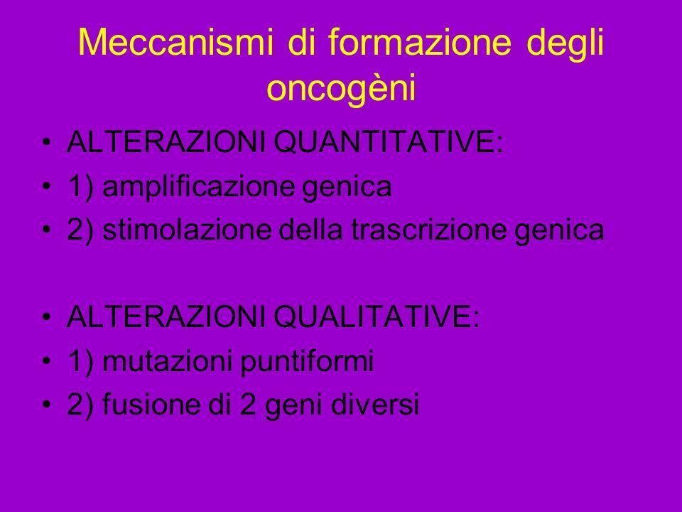 Meccanismi di formazione degli oncogèni ALTERAZIONI QUANTITATIVE: 1) amplificazione genica 2) stimolazione della trascrizione genica ALTERAZIONI QUALITATIVE: 1) mutazioni puntiformi 2) fusione di 2 geni diversi