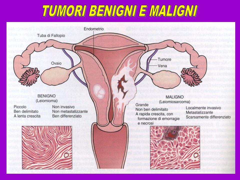 Numerose evidenze sperimentali dimostrano che nessun oncogene è in grado di trasformare completamente una cellula in vitro da solo.