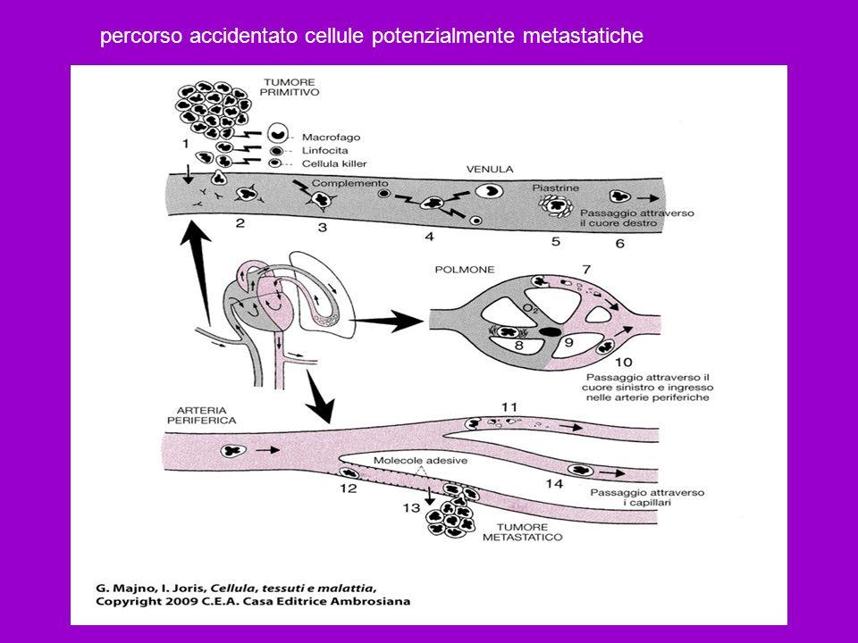 percorso accidentato cellule potenzialmente metastatiche