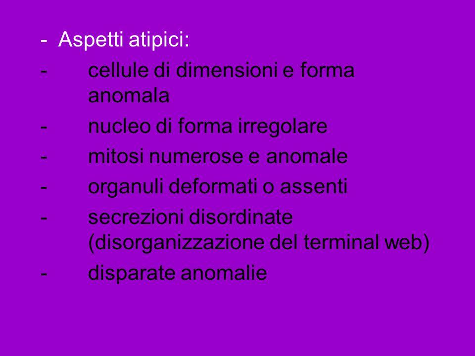 -Aspetti atipici: -cellule di dimensioni e forma anomala -nucleo di forma irregolare -mitosi numerose e anomale -organuli deformati o assenti -secrezioni disordinate (disorganizzazione del terminal web) -disparate anomalie
