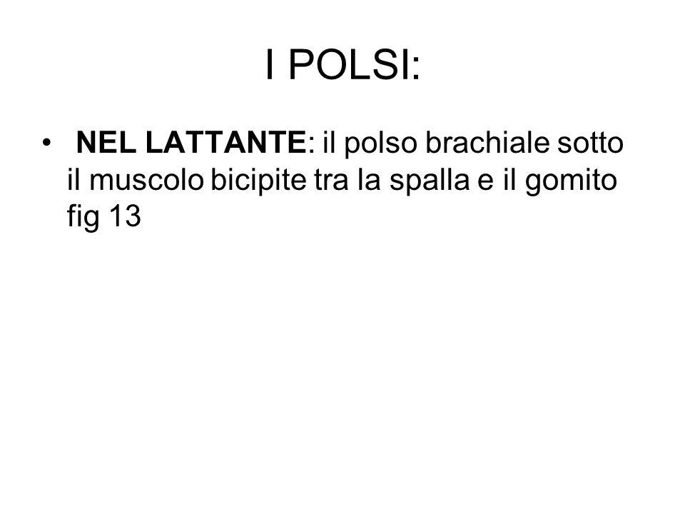 I POLSI: NEL LATTANTE: il polso brachiale sotto il muscolo bicipite tra la spalla e il gomito fig 13